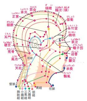 顔の経絡図